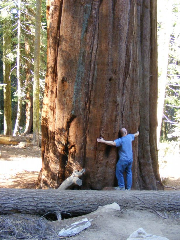 A Tale of Two Giant Trees at Sequoia National Park and Muir Woods National  Monument   The Life of Your Time