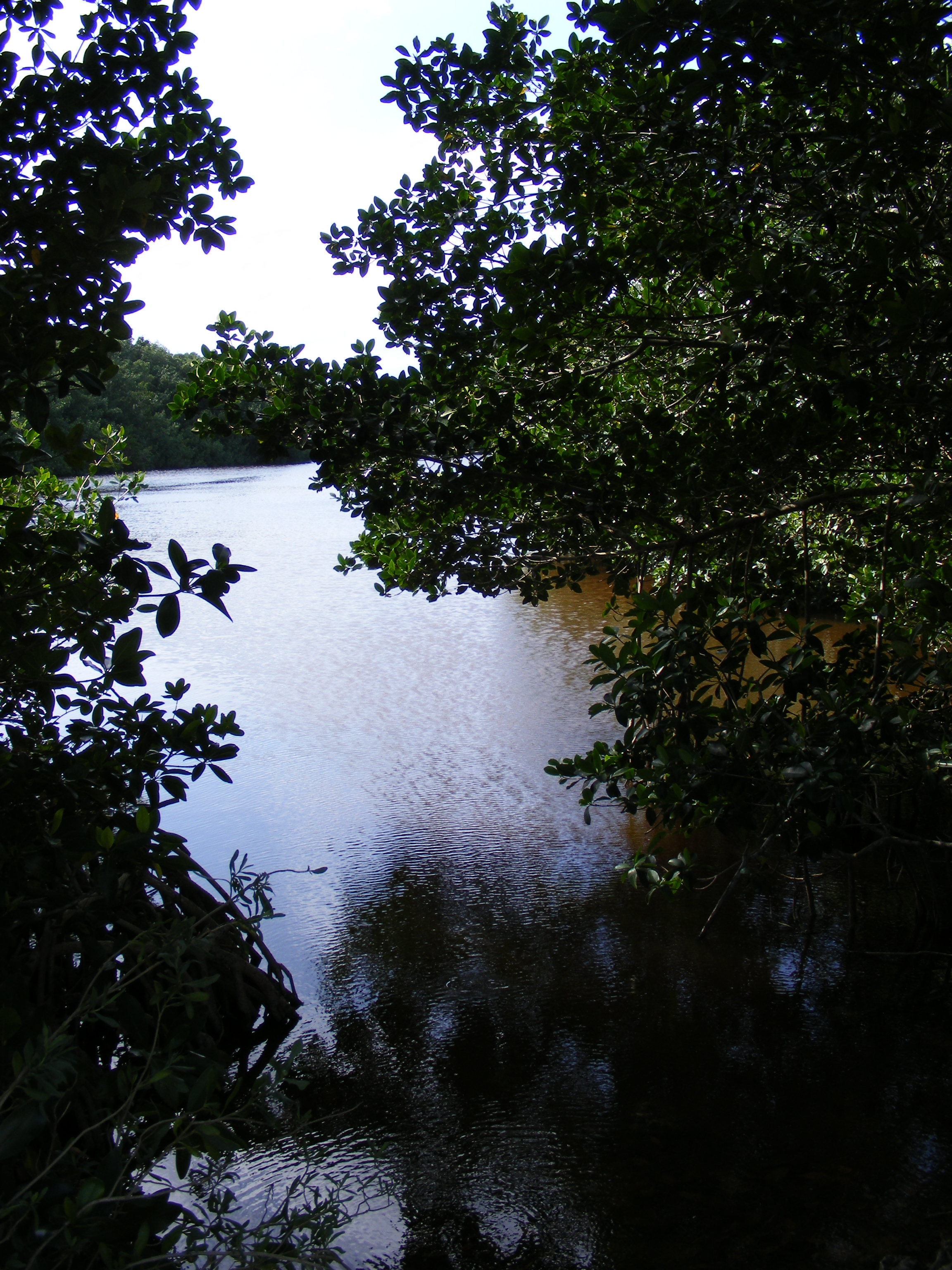 Everglades National Park Plant Communities The Life Of