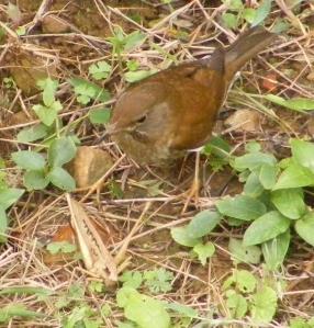 birdgrasshopper