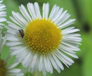 minutepiratebugs2