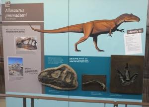 dinoallosaurus