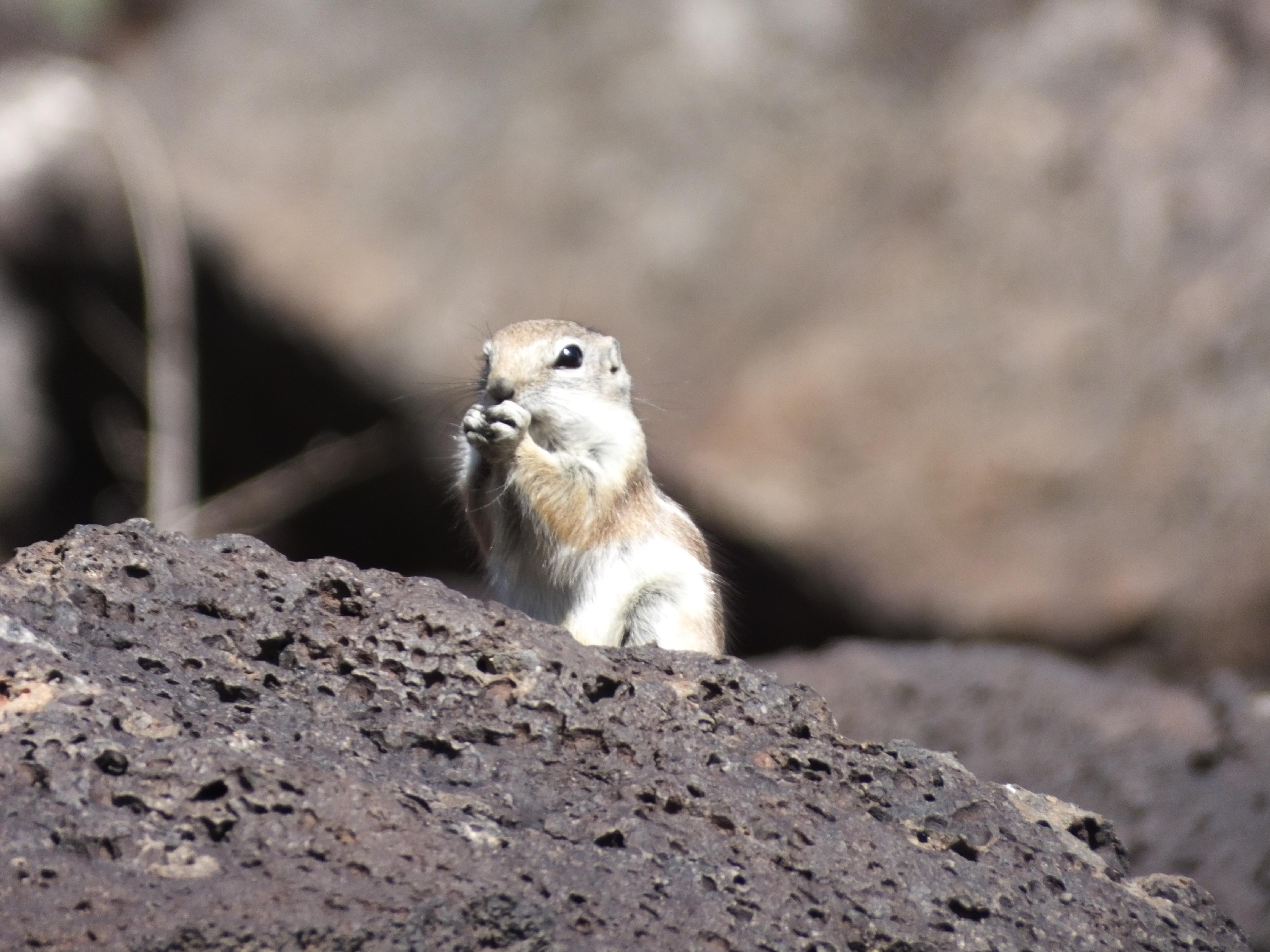 New Mexico Rodent Albuquerque New Mexico