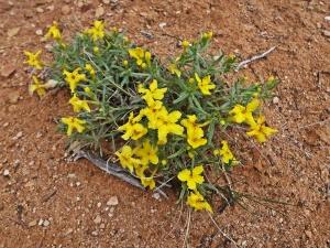 xwildflower