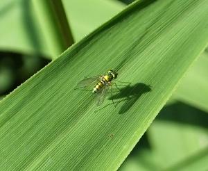 truefly
