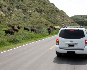 bisoncar