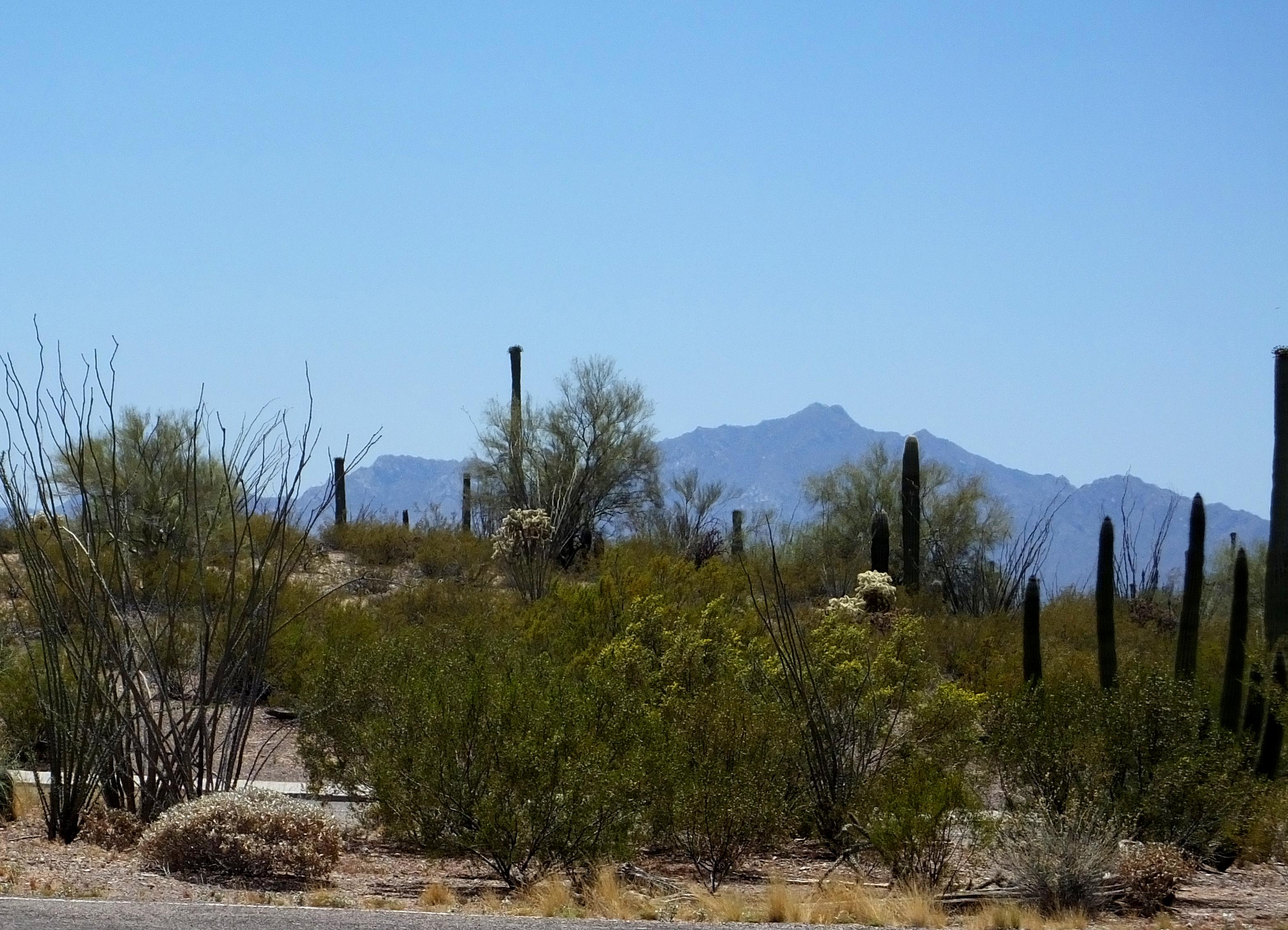 Alamo Canyon, Organ Pipe Cactus National Monument, Arizona без смс