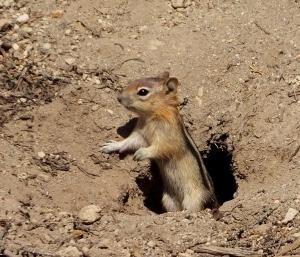 crlasquirrel