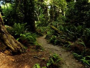 redwforest