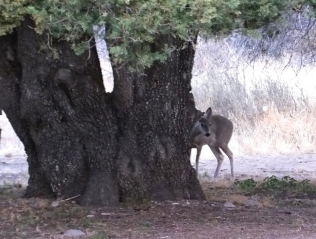 deerpeek